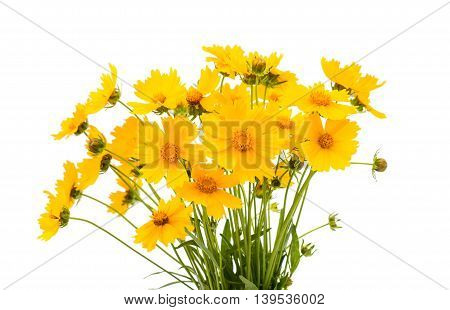 yellow colorful flower on a white background