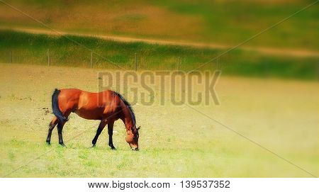 Brown horse grazing in green field outside