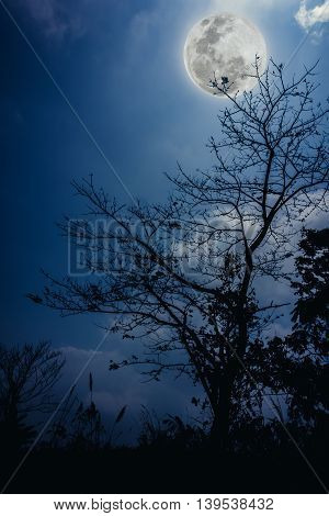 Silhouettes Of Dry Tree Against Blue Sky And Beautiful Moonrise. Outdoor.
