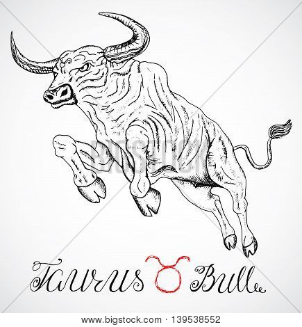 Hand drawn astrological zodiac sign Bull or Taurus. Line art vector illustration of engraved horoscope symbol. Jumping ox, traditional style. Doodle drawing and sketch with calligraphic lettering