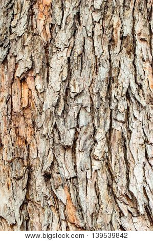 Bark texture of the tree in the nature