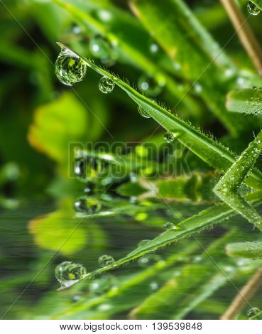 Dew drops on green grass leaves with water reflection