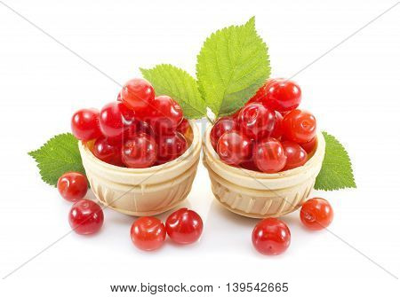 Dessert with ripe tasty cherry in waffle tartlets isolated on white