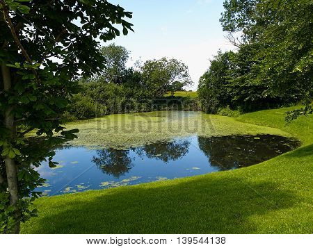 Sunny day on a calm pond lake in summer beautiful nature background image