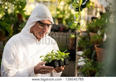 Male scientist examining saplings at greenhouse