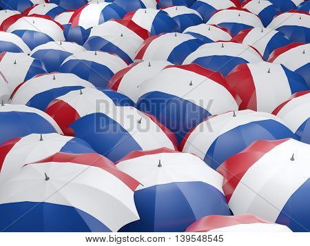 Umbrellas With Flag Of Netherlands