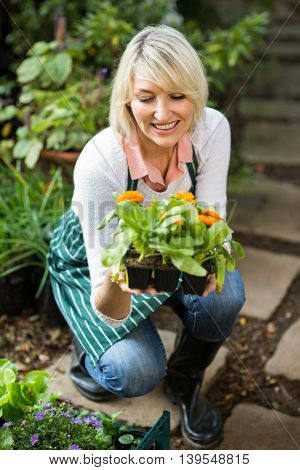 Happy female gardener examining potted plant at greenhouse