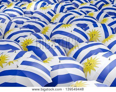 Umbrellas With Flag Of Uruguay