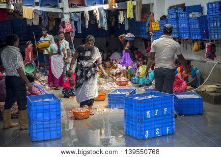 Sassoon Docks In Mumbai, India