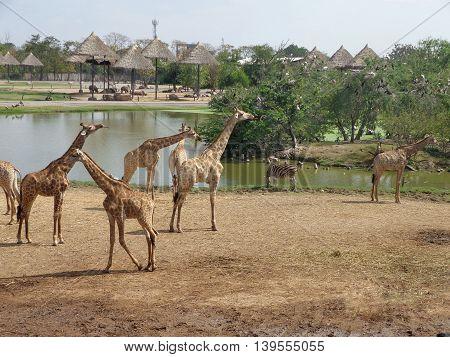 This Beautiful landscape from safari park bangkok Thailand