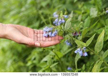 Female hand touching flower bell. Macro. Background
