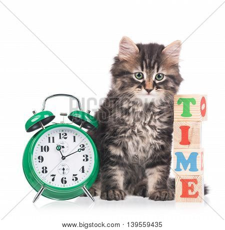 Cute siberian kitten with alarm clock isolated over white background
