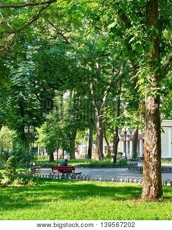 city park at summer season, bright sunlight and shadows, beautiful landscape
