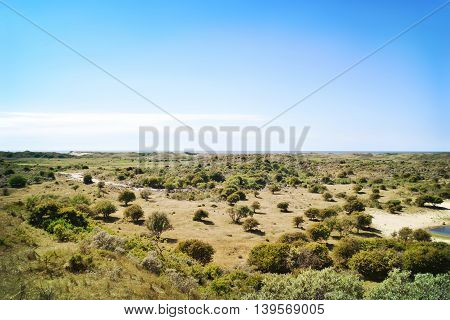 Savannah with water hole and buffaloes. Panoramic landscape with view to the sea.