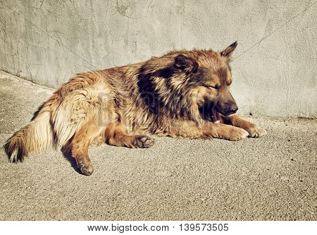 Sleepy homeless dog with sad eyes is laying outdoors