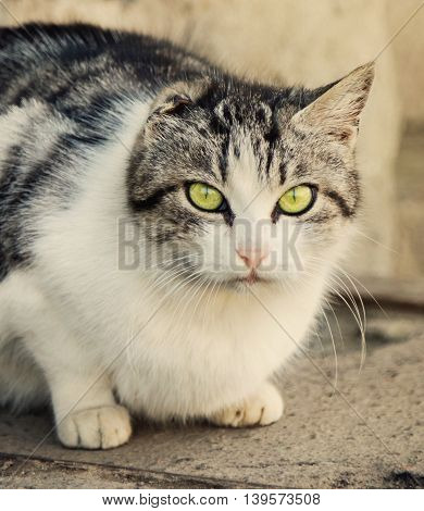 Homeless stripy cat without ear looking at camera
