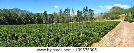 Francehhoek Grape Farm, Western Province, South Africa