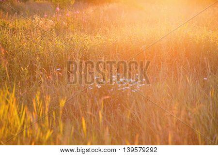 Grass in sun light. Summer nature background
