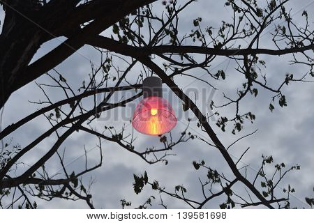 Vintage lamp on tree and lamp post at sunset