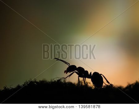 Silhouette Of An Ant On An Orange Background. Sunset. Macro