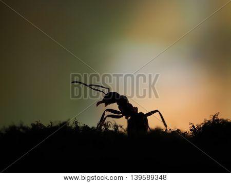 Sad tired ant at sunset. Orange and black. macro
