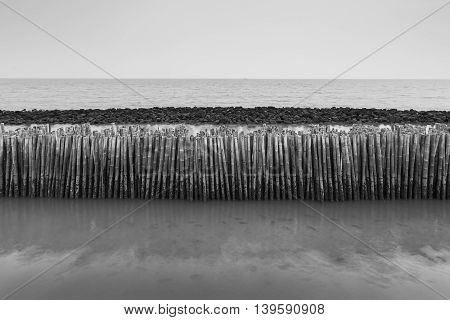 Black and White, Bamboo fence protect sandbank from sea wave