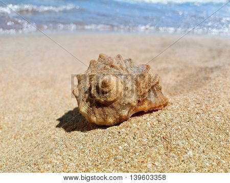 Large whelk shell at the beach standing on the golden sand. Summer vacation background