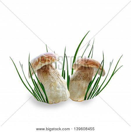 autumn boletus mushrooms isolated on white background