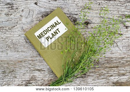 Medicinal plant shepherd's purse (Capsella bursa-pastoris) and herbalist handbook on old wooden table. Used in herbal medicine healthy eating as well as for cosmetics purposes