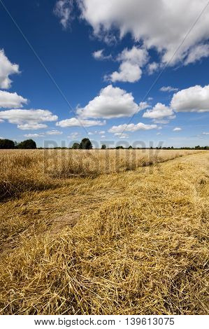 agriculture - agricultural field where harvest of cereals