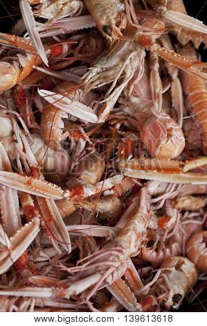 Scampi In A Fish Store