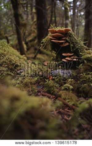 A Stack of Mushrooms in the Forest