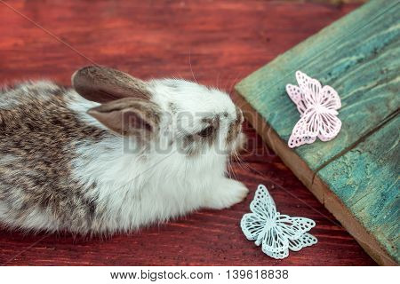 Cute little bunny rabbit with beautiful butterfly decorative artificial plastic pins on wooden background