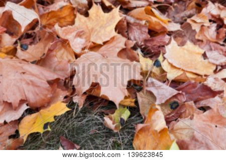 photographed trees and foliage in the autumn, the location - a park, defocus