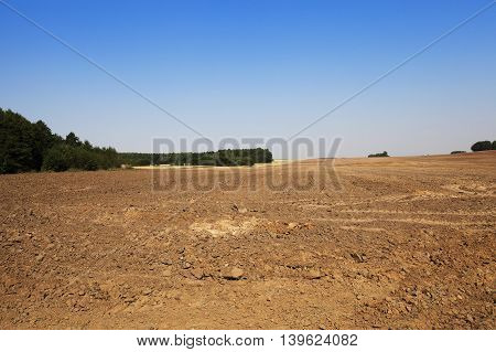 plowed agricultural field in the background trees and blue sky