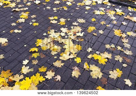 The fallen from the trees and lying on the sidewalk for pedestrians yellowed foliage of maple, autumn season, a small DOF,