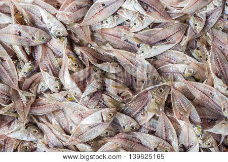 Stack Of Fish Skeleton After Filleting