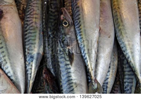 Sardines in row with one eye standing out