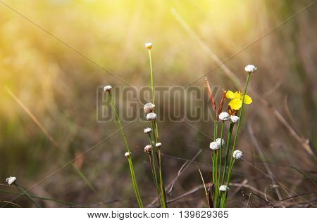small flower in meadow field at morning sunlight background