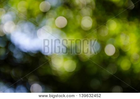 abstract beautiful green natural light bokeh background.