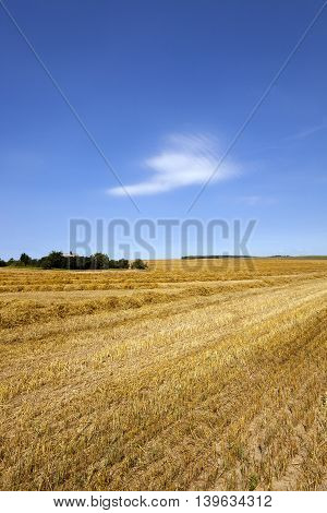 an agricultural field on which reap a crop of cereals, wheat