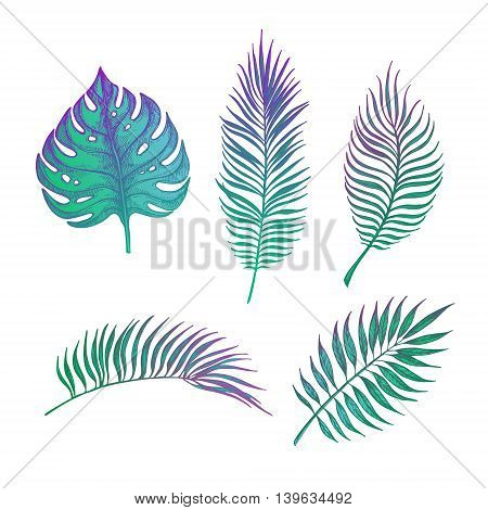 Hand Drawn Vector Illustration - Palm Leaves. Tropical Design Elements