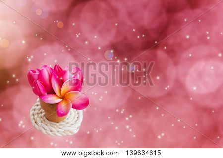 Lovely pink flowers frangipani or plumeria in small vase on romantic soft pink dreamy soft bokeh background and lens flare for valentine