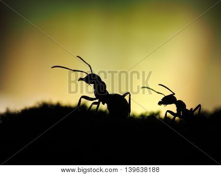 Ants silhouettes on a beautiful background. macro