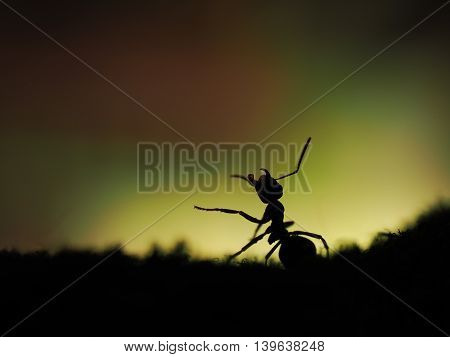 Large ant silhouette on beautiful background. macro