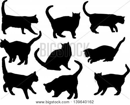 illustration with cat silhouettes collection isolated on white background