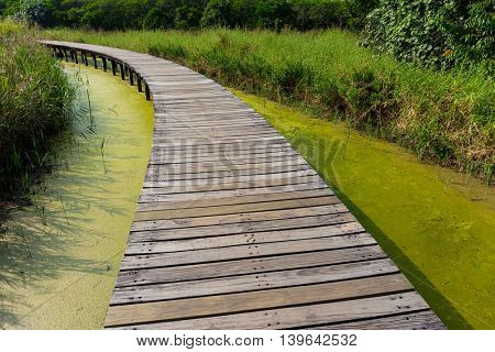Wooden bridge footpath in forest