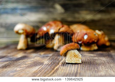 Small white mushroom against a background of many large mushrooms. Rustic wooden background ..