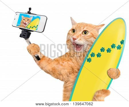 Beautiful surfer cat on the beach taking a selfie together with a smartphone. Isolated on the white.
