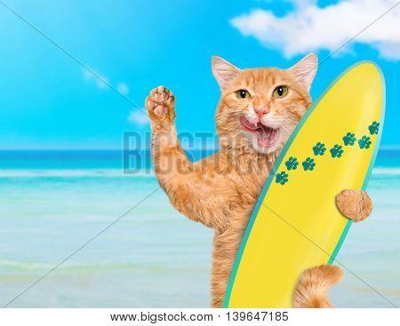 Beautiful surfer cat on the beach .
